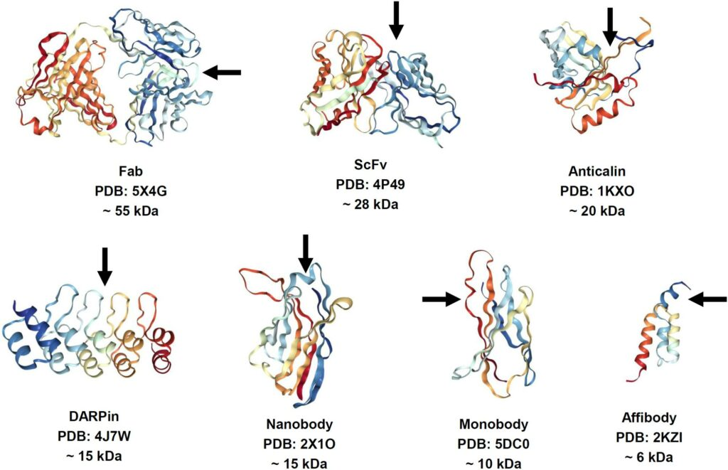 Classical antibody scaffolds and structures are being challenged by smaller but equally potent molecules which have a number of benefits over the large bulky IgG molecule. Non-antibody scaffolds are interesting as therapeutic drugs thus the rich interest in these scaffolds (Frejd, F. et al). Easily configure thePipeBio scaffold systemto support nearly any molecular scaffold including user defined detection of liabilities, sequence motifs, or ambiguous nucleotide residues.
